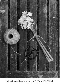 Narcissi flowers tied with twine, with a ball of garden string and scissors on a wooden slat background - monochrome processing