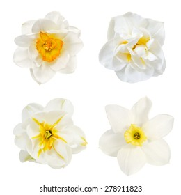 narcissus  collage, flowers are is isolated on the white