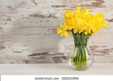 Narcissus - daffodil, a species of amaryliaceous plant species.