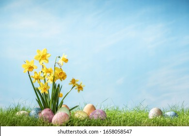Narcissus flower with easter eggs in spring grass with sky