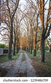 Narrow alley with tall trees during sunset