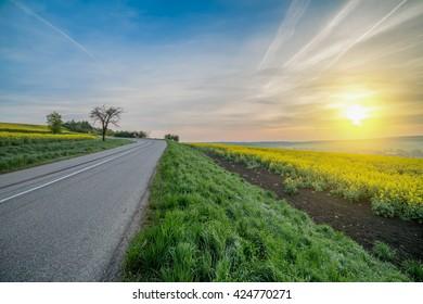 narrow asphalt road in the green fields