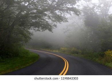 A narrow back road that winds through a forest is socked in by fog which dangerously reduces visibility for travelers