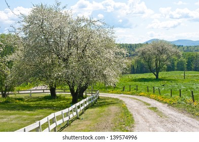 A narrow country road winds through an old apple orchard in Vermont.
