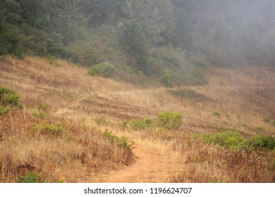 Narrow dirt path curves through dry grass and fog