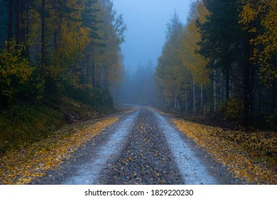 Narrow dirt road with yellow leaves in forest in foggy evening