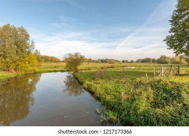 The narrow Dutch river Mark in the fall season. The nature is already changing the colors. In the background are some ruminating cows. The photo was taken near the village of Strijbeek, North Brabant.