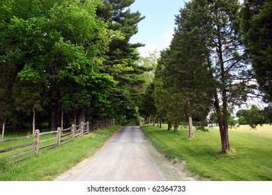 narrow farm road lined with tall trees