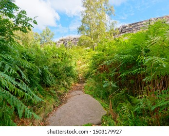 Narrow footpath between tall ferns leads up hill towards the cliff face of Birchen Edge in Derbyshire