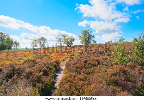 A narrow footpath leads up a gentle hll anidst heathers and ferns on Stanton Moor in Derbyshire