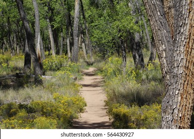 Narrow Forest Path with Wildflowers