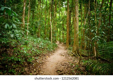Narrow forest path winding through rainforest. Woodland walk. Green foliage.
