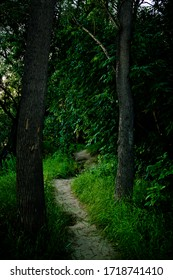 A narrow forest path winds through tall trees in a dark forest.  The dense foliage of the trees does not let in daylight and therefore it is dark around.