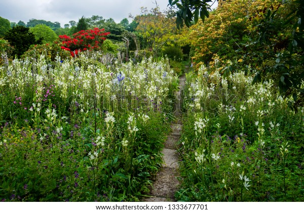 Narrow Garden Path Through Flower Bed Stock Photo Edit Now