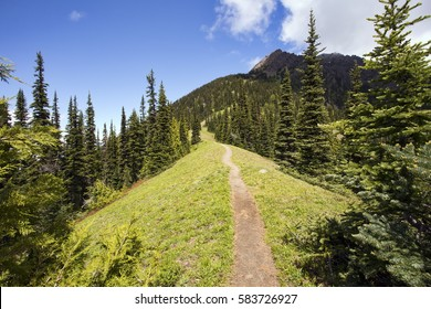 A narrow hiking path heads  through a pine forest, up a steep mountain ridge. Taken at Olympic National Park in Washington.