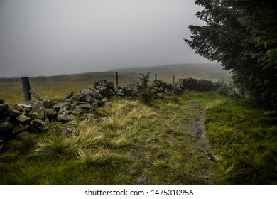 Narrow Hiking Trail Through Misty Conifer Forest and Heather Flowers in Scotland