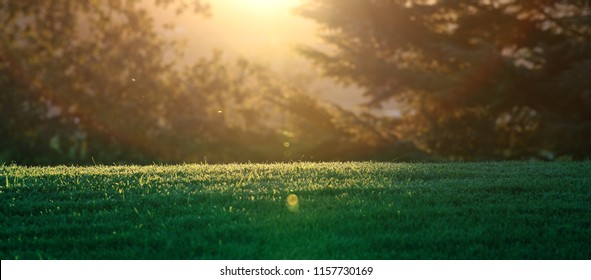 A narrow horizontal manicured lawn with the sun setting through the forest trees in the background.