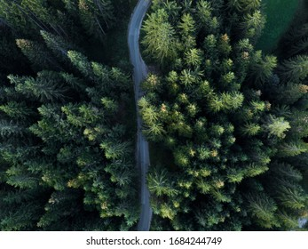 Narrow mountain tarmac road trough the pine forest - aerial drone, birds eye perspective