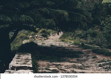 Narrow old stairs between dark green grass and tree. The image is for background of hiking, trailrunning, commercing, etc.