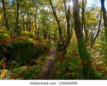 A narrow path across a wooded hillside, running between the trees and rocks in Froggat Woods.