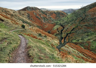 Narrow path along Townbrook valley,  Long Mynd, Shropshire Hills, England, UK. leafless tree and red bracken in late autumn.