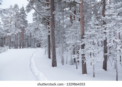 Narrow path among snow-covered pines