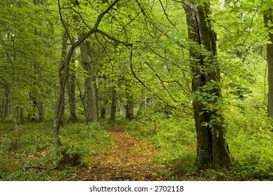Narrow path covered by fallen leaves,autumnal forest