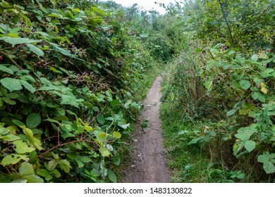 A narrow path cutting through brambles in the Berkshire Countryside, UK