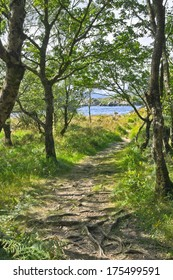 A narrow path with exposed tree roots leads through the dappled shade of an oak woodland to the shore of the Upper Lake, Killarney, Kerry, Ireland.