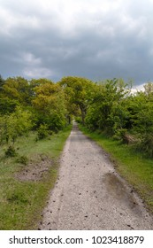 narrow path in the forest with a beautiful cloudy sky
