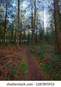 A narrow path leads through dark shaded woodland on a cold, bright winters day