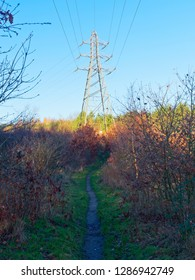 A narrow path on the edge of a wood passes between saplings leading to an electricity pylon