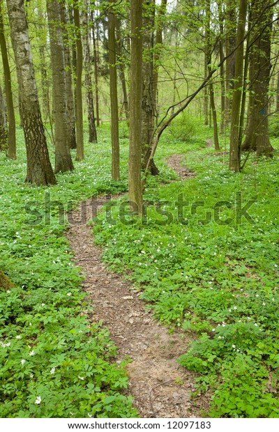 Narrow path through early spring forest