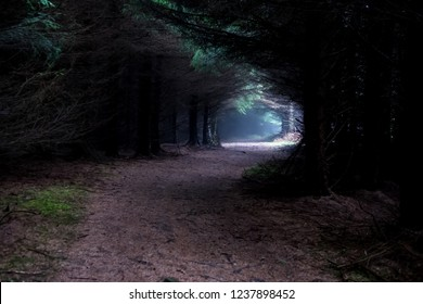 Narrow Path Through Foogy Mysterious Forest