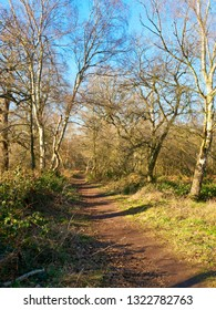 A narrow path winds between tall, bare, Silver Birch and Oak trees in Sherwood Forest.