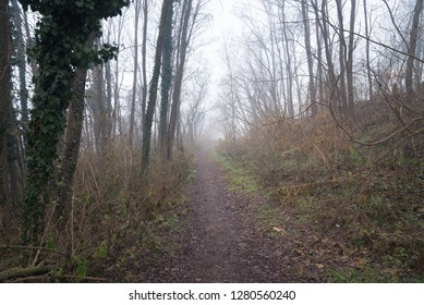 Narrow Path in the Woods on a Foggy Winter Morning