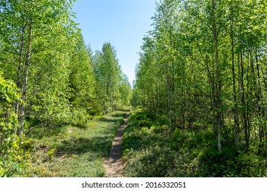 Narrow pathway in the forest. High Coast area, Sweden