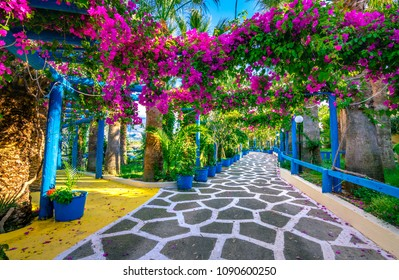 Narrow paved street full of colorful flowers in Sisi, Crete, Greece.