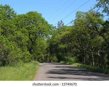 A narrow road in Chico's Bidwell park in northern California amid lush spring growth.
