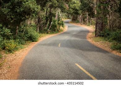 A narrow road winds through an oak woodland