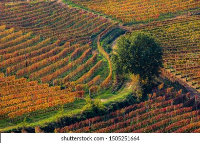 Narrow rural road among colorful autumnal vineyards on the hills of Piedmont, Northern Italy.