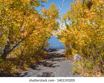 Narrow sandy path to a mountain lake surrounded by yellow trees in peak fall colors on a sunny day. Fishing equipment is seen on the shore with colorful blue water of Convict Lake in the background.
