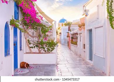 Narrow scenic street of Oia Village on Santorini Island at sunset, Greece.