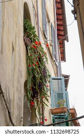 narrow side street in the Italian town of Lucca in Tuscany with old house facades and flowering cactuses