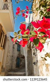 Narrow streets and white houses of Skopelos town at summer morning, island of Skopelos, Greece