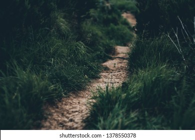 Narrow thin path between dark green grass. The image is for background of hiking, trailrunning, commercing, etc.