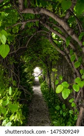 Narrow Tunnel With Leaves And Bright Illuminated Exit