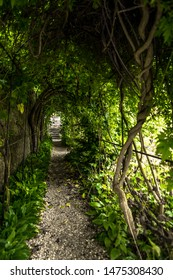 Narrow Tunnel With Leaves and Stairs In Garden