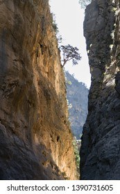 The narrowest spot of the Samaria Gorge (Crete, Greece) early morning when sun is just raising and throws light  into hidden valley and one brave tree attached to the vertical cliff
