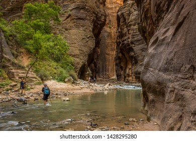 The Narrows, Zion National Park, September, 24, 2015: Hikers wading through the Virgin River  as it weaves its way through the spectacular and stunning Narrows Canyon, Zion National Park, USA